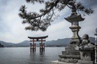 giappone torii templi fotografia