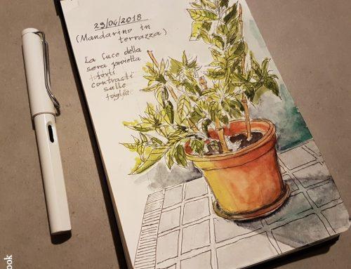 Schizzi di piante sul terrazzo (Sketchbook)